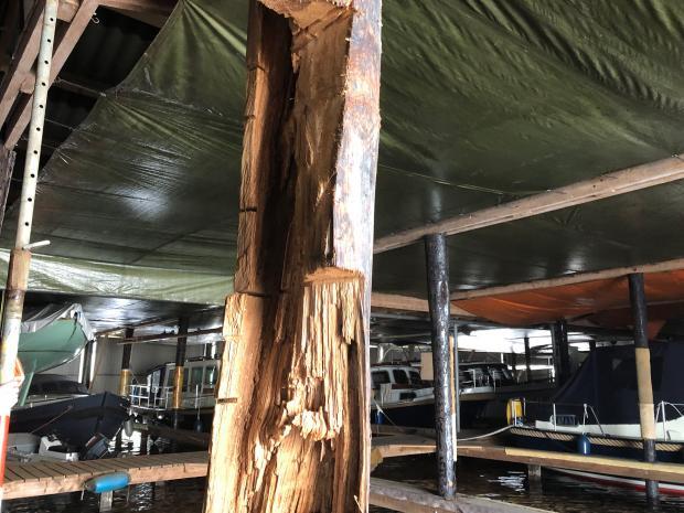 Verwijderen slecht hout